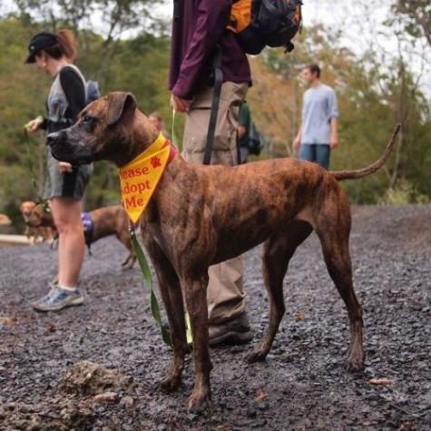 CAPSTONE: A Dog's Tail